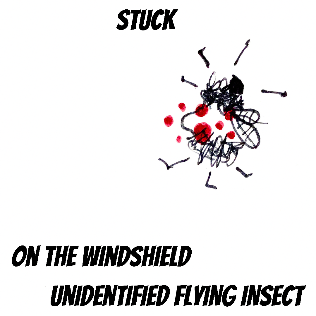 stuck on the windshield unidentified flying insect